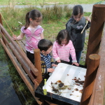 corry meadows pond dipping